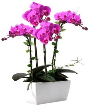 Seramik vazo içerisinde 4 dallı mor orkide  Rize çiçek servisi , çiçekçi adresleri