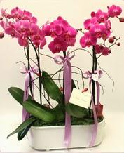 Beyaz seramik içerisinde 4 dallı orkide  Rize kaliteli taze ve ucuz çiçekler