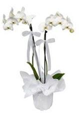 2 dallı beyaz orkide  Rize çiçek siparişi vermek