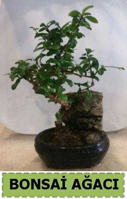 Bonsai ağacı japon ağacı satışı  Rize güvenli kaliteli hızlı çiçek