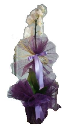 Tek dallı beyaz orkide süper kalite ithal  Rize online çiçekçi , çiçek siparişi