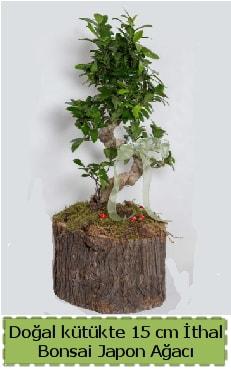 Doğal kütükte İthal bonsai japon ağacı  Rize hediye sevgilime hediye çiçek