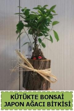 Kütük içerisinde doğal bonsai ağacı  Rize çiçek online çiçek siparişi