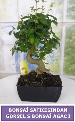 S dal eğriliği bonsai japon ağacı  Rize çiçek servisi , çiçekçi adresleri