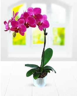 Tek dallı mor orkide  Rize çiçek servisi , çiçekçi adresleri