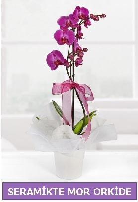 Seramik içerisinde birinci kalite tek dallı mor orkide  Rize uluslararası çiçek gönderme