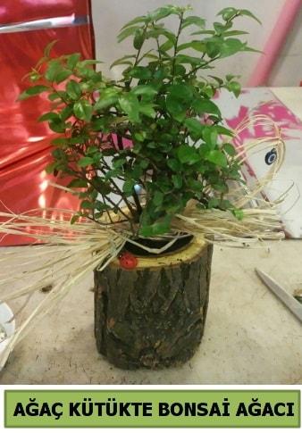 Doğal ağaç kütük içerisinde bonsai ağacı  Rize 14 şubat sevgililer günü çiçek