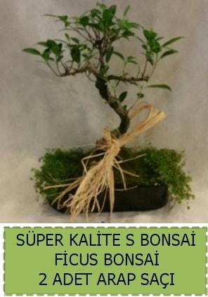 Ficus S Bonsai ve arap saçı  Rize çiçek online çiçek siparişi