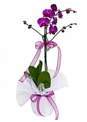 Tekli Mor Orkide  Rize anneler günü çiçek yolla
