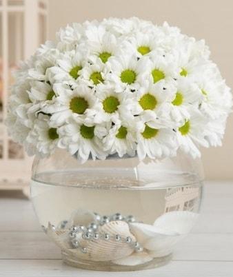 Fanusta beyaz Papatya  Rize çiçek servisi , çiçekçi adresleri